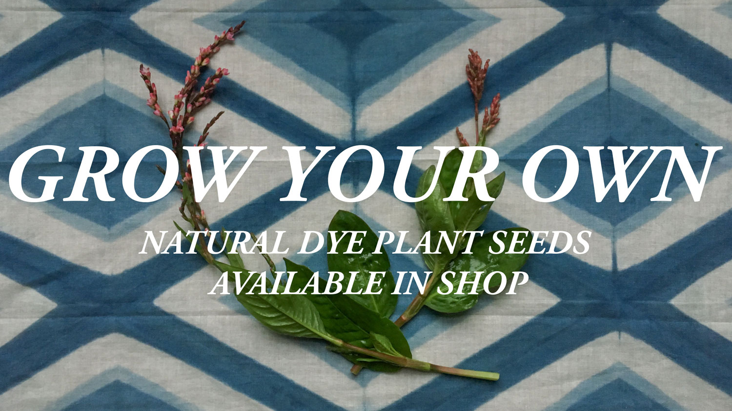 Natural Dye Plant Seeds Available In Shop Indigo Madder Weld