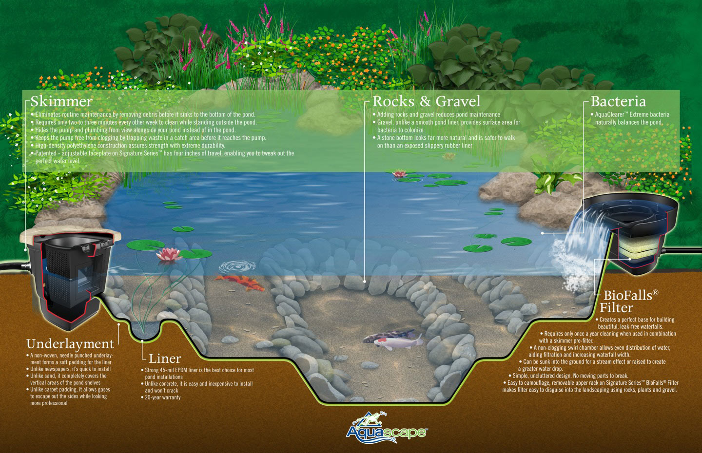 A diagram of a properly designed pond with shelving appropriate for fish