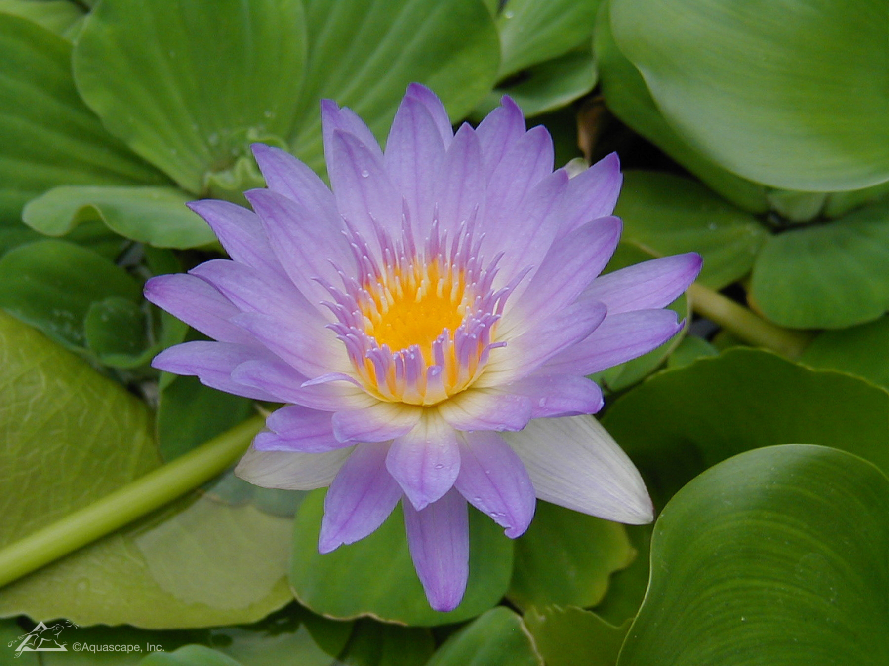 Plant_15.JPG
