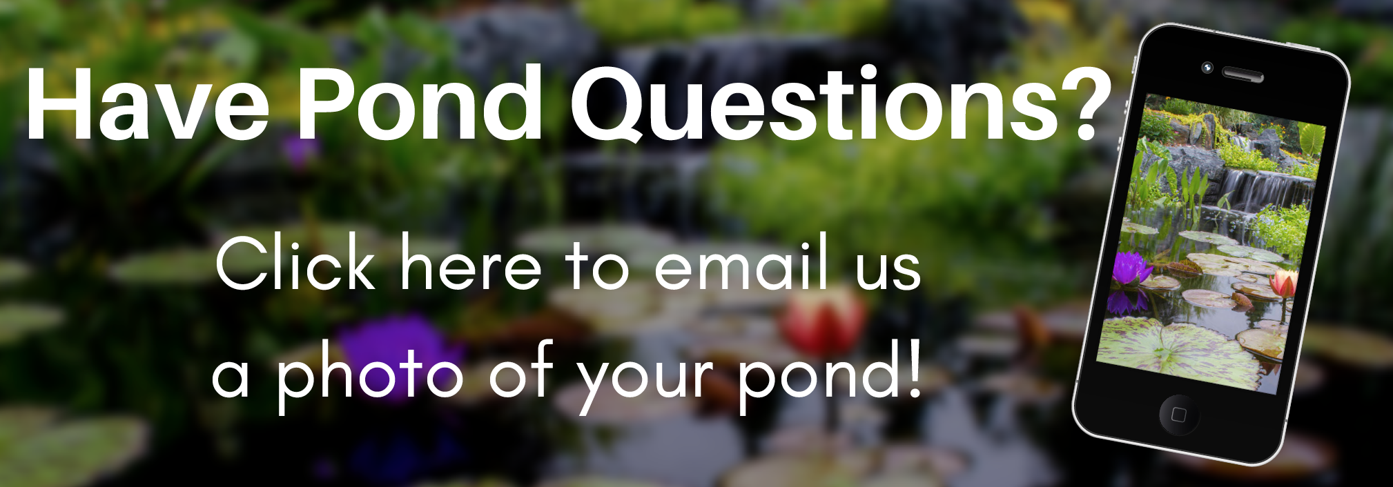 pond questions email