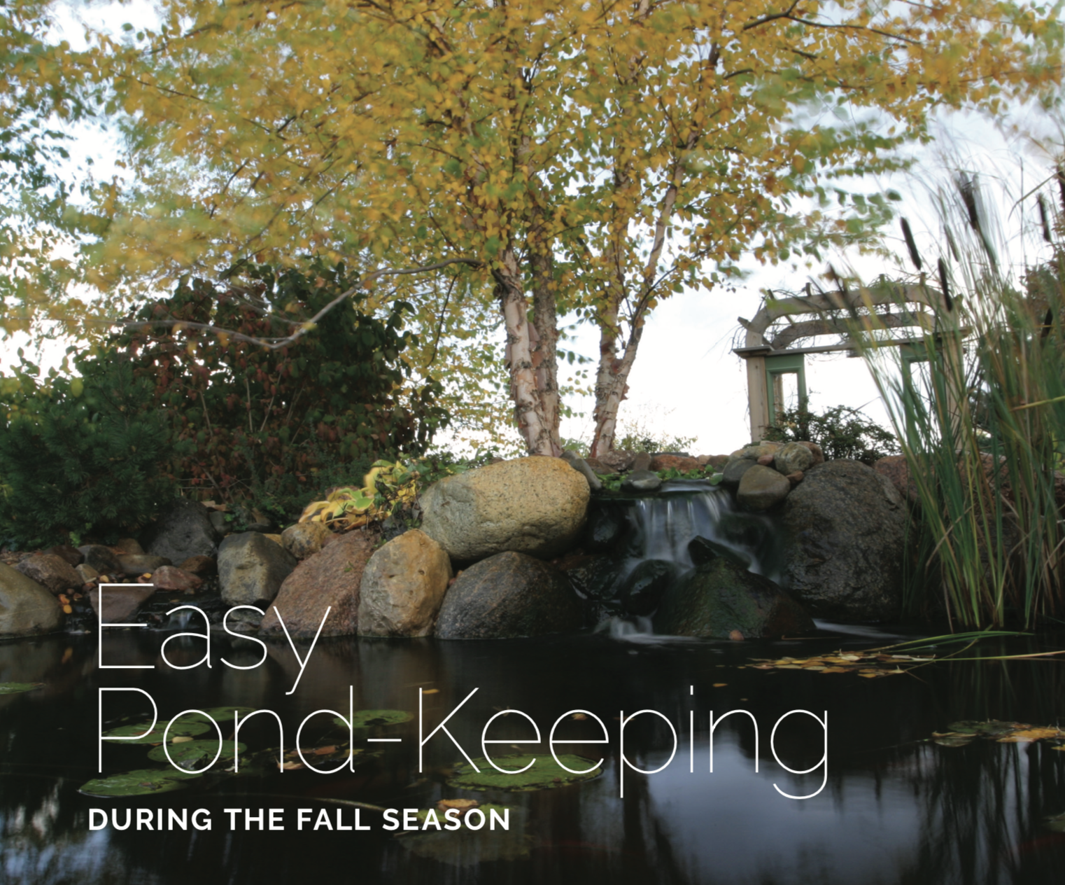 Read this    e-book    for tips and advice on fall pond maintenance!