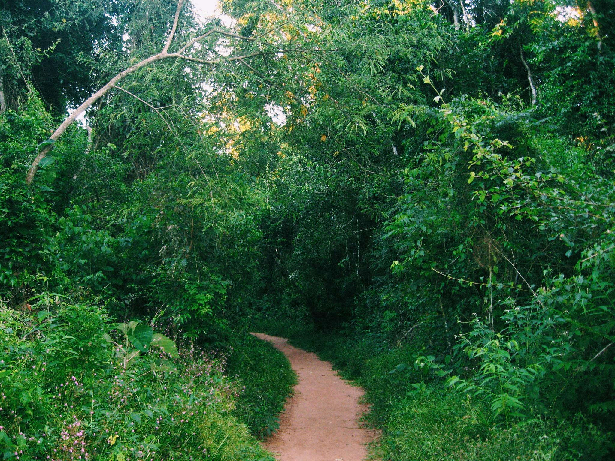 Sendero Macuco, Parque Nacional Iguazú (Argentina)