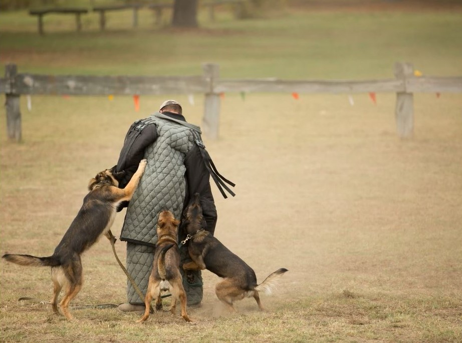 Dunetos K-9 provides service, protection, and tactical dogs. They demonstrated many different skills including search and rescue, dog/handler training techniques, and protection/attack scenarios (pictured).