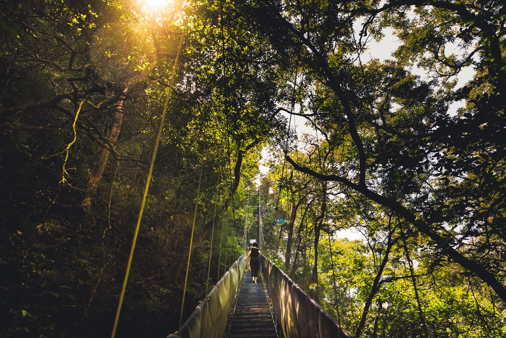 Jungle bridge in Costa Rica.