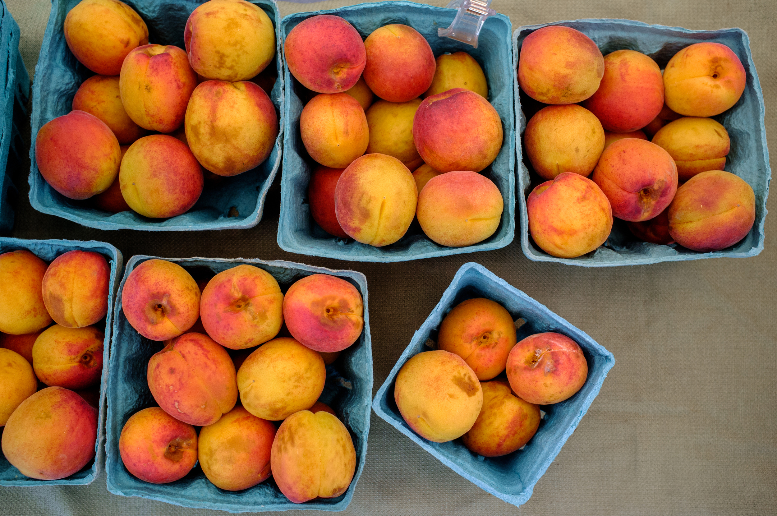 Apricots from Toigo Orchards