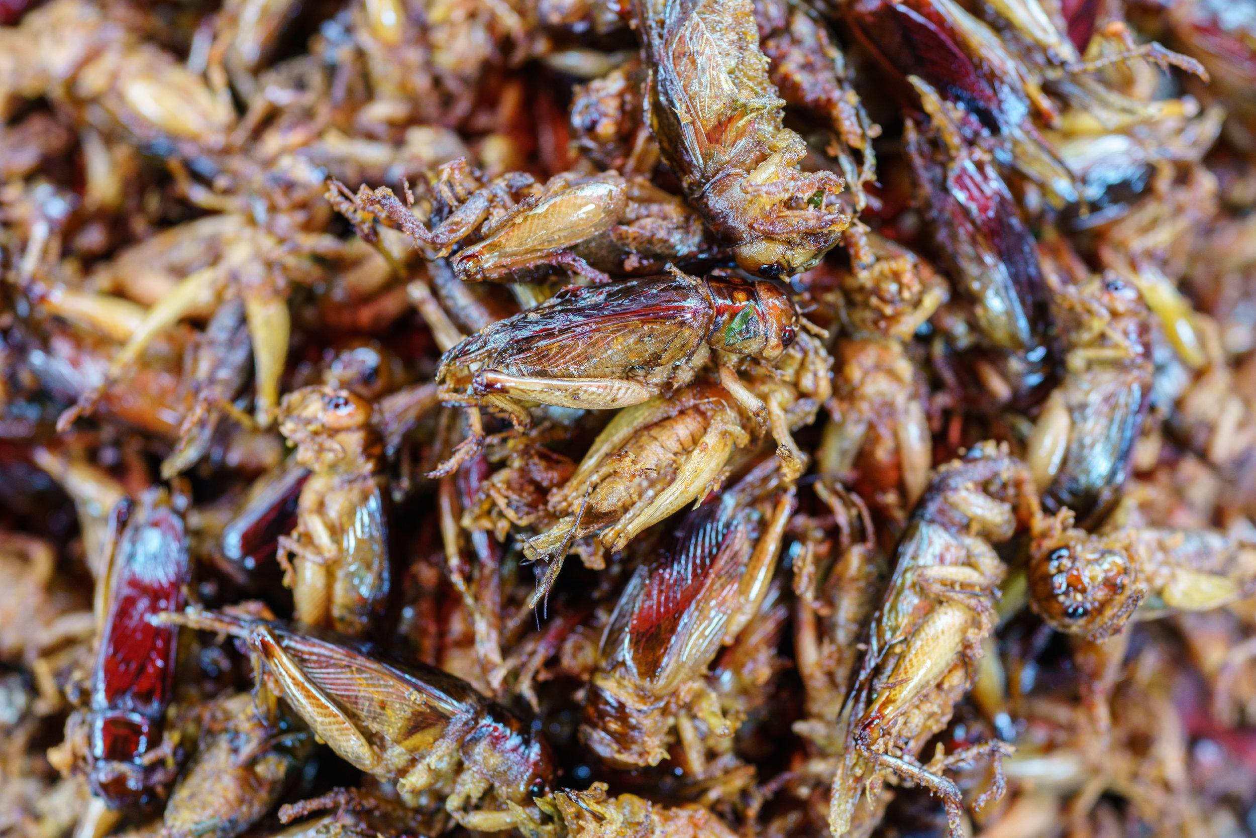 Crunchy crickets