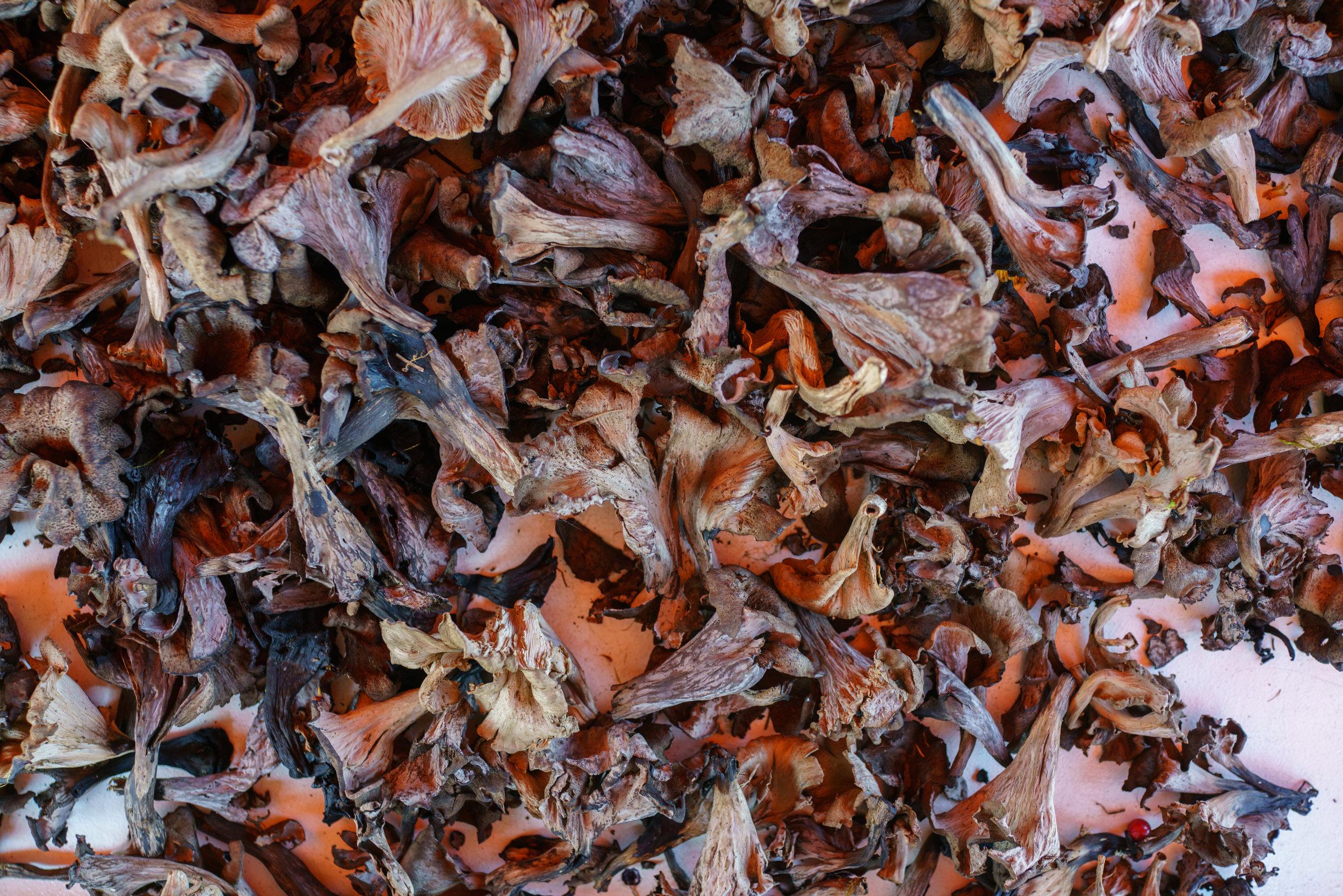 Mushooms at Market Square