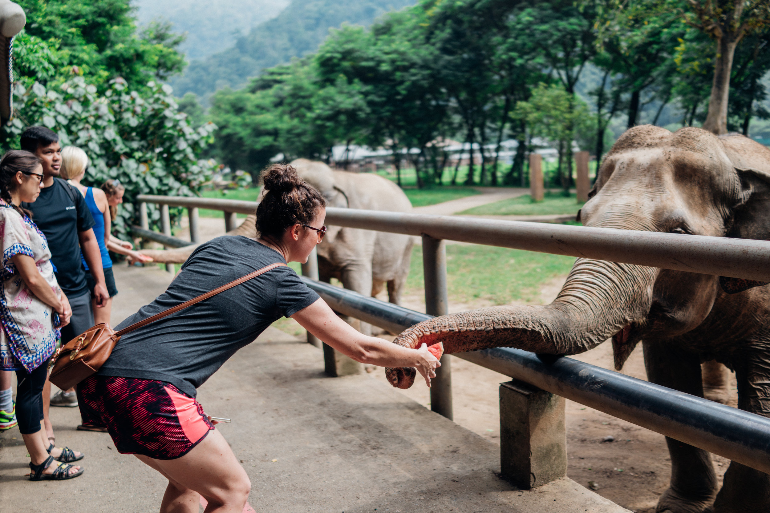 "Rule Follower Meghan stretching hard to feed the elephant — we were instructed not to go ""beyond this point"""