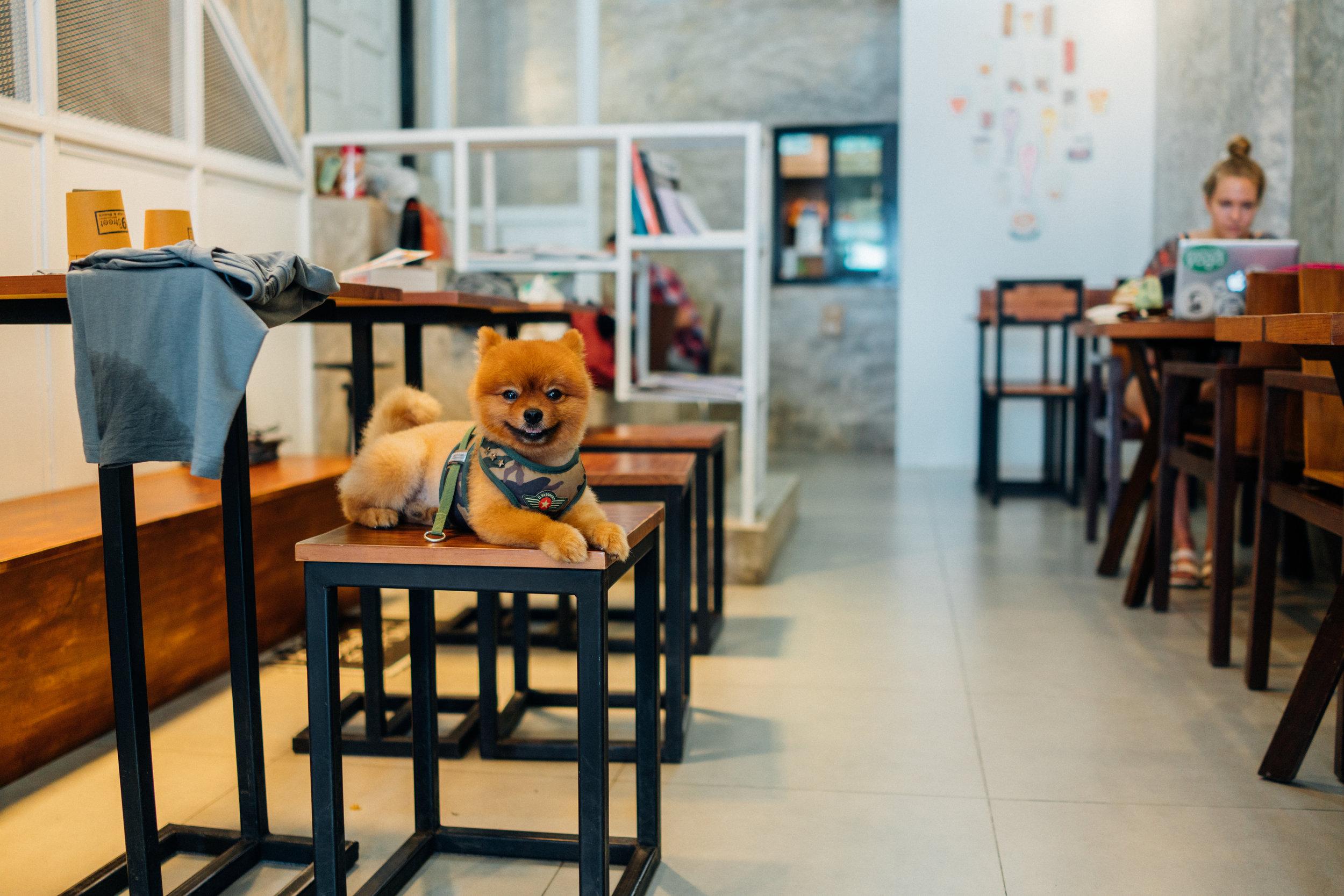 Panda presides over 9th Street Cafe