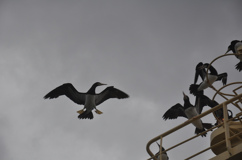 the best part was watching them fight and stick their feet out for not so graceful landings...