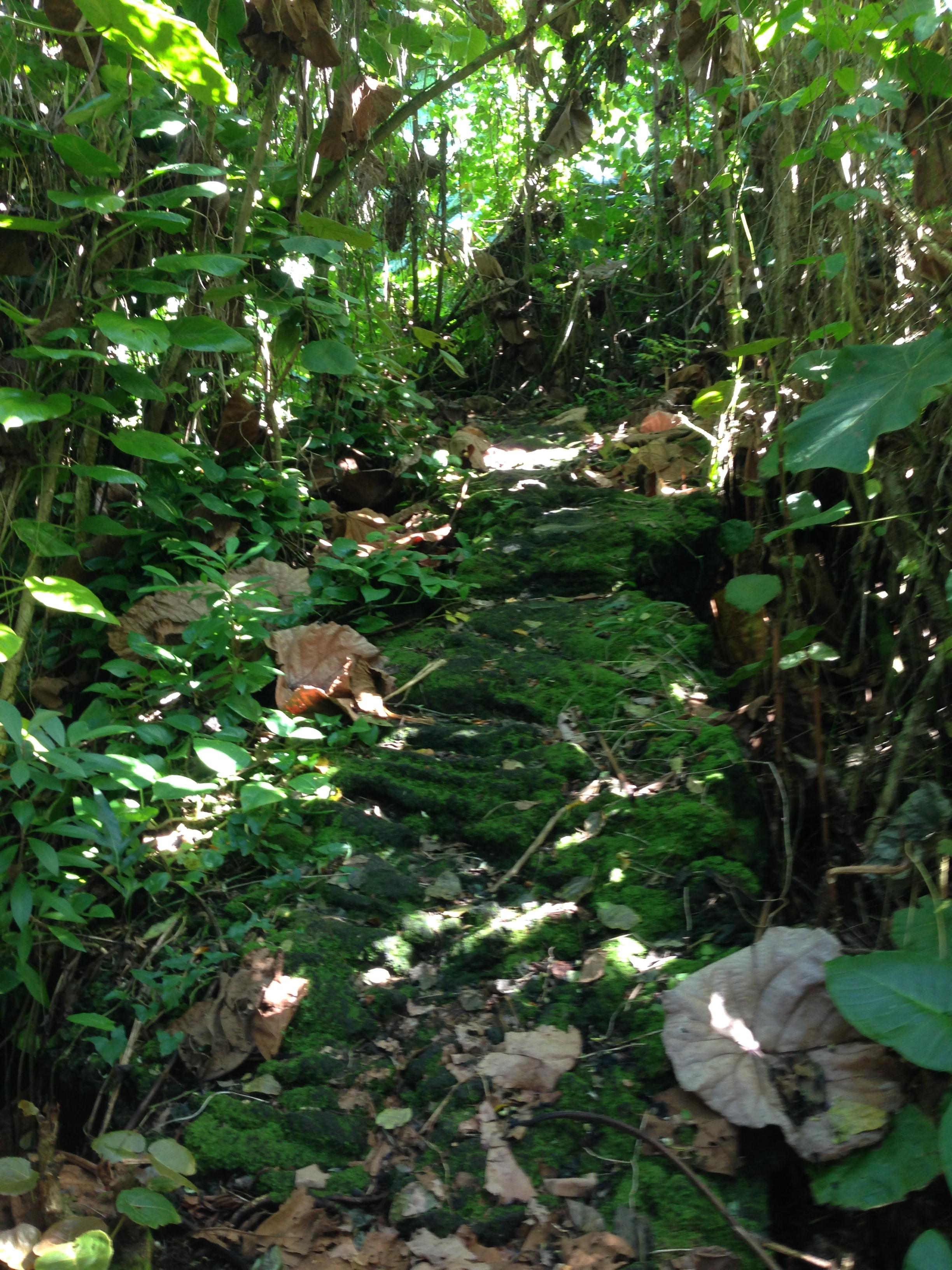 Jungle Walk. Fitness!