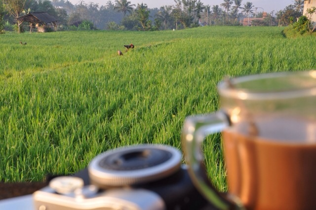 Rice Paddies, A Camera, A Coffee.  Bliss.