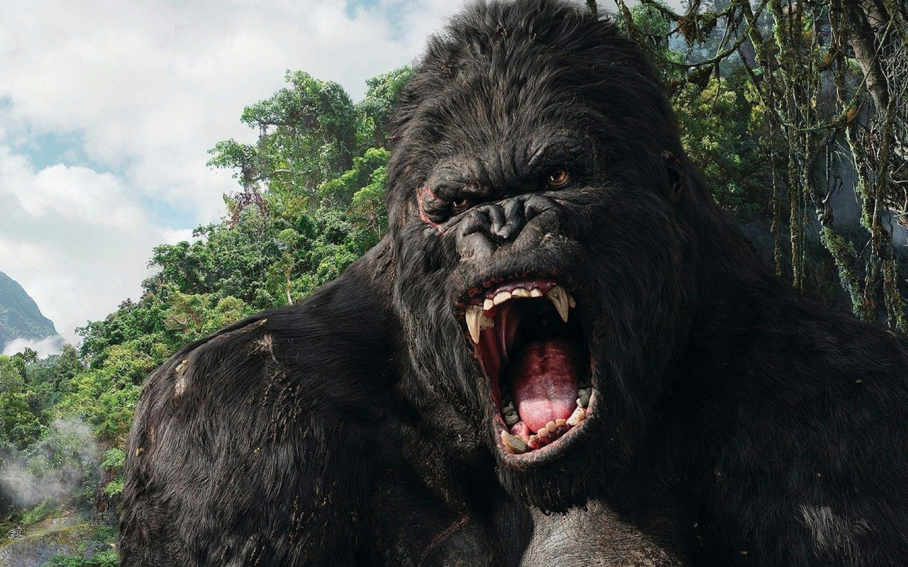 Kong_ready.jpg