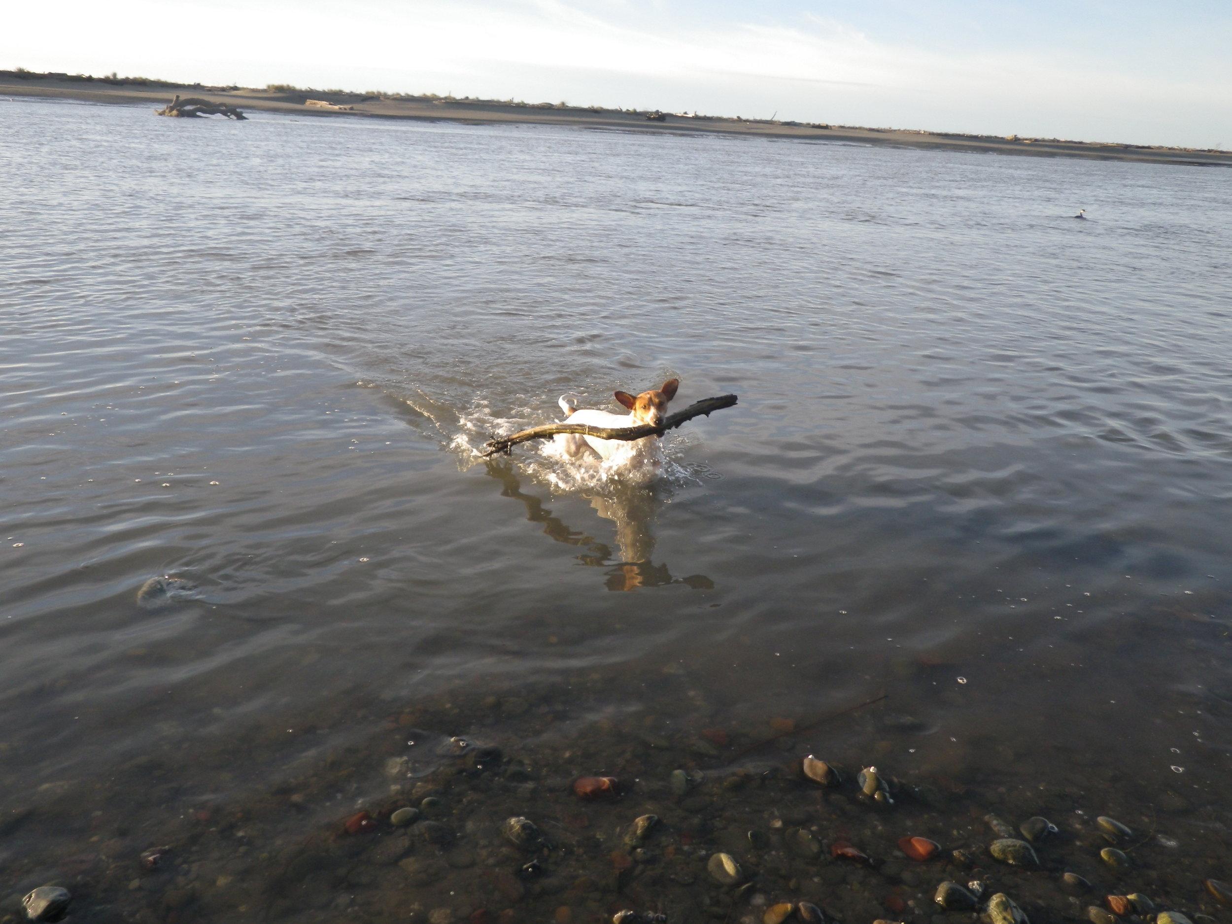20121213 Mad River Estuary (4).JPG