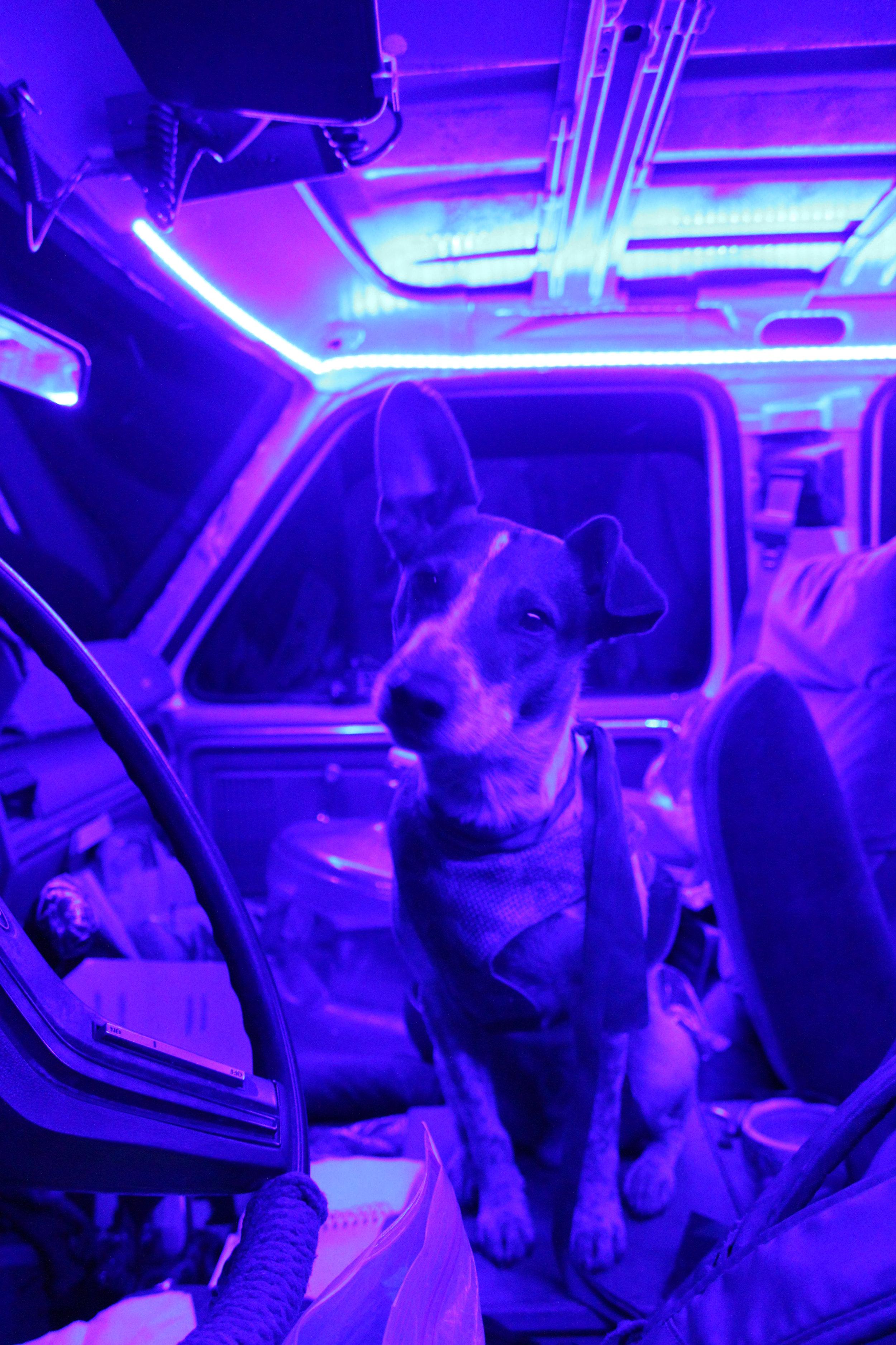 20150808 Yarnbeast Blue Light Special Truck (1).JPG