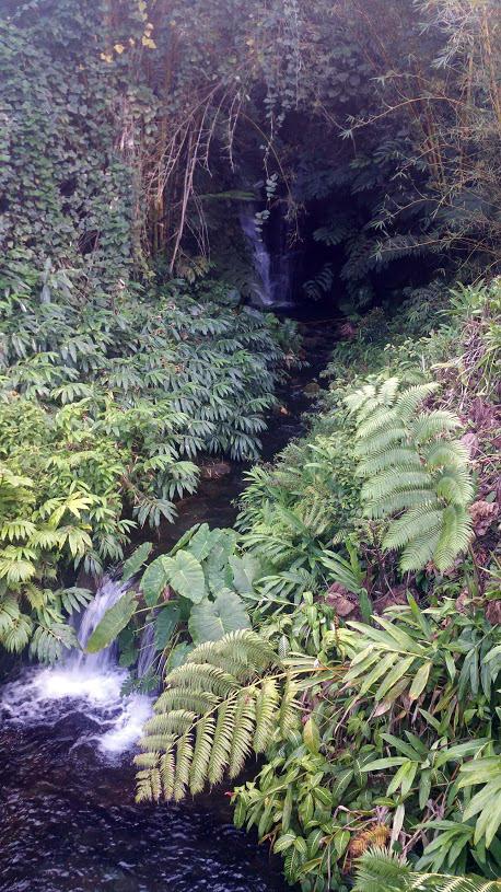 Stream near Akaka Falls