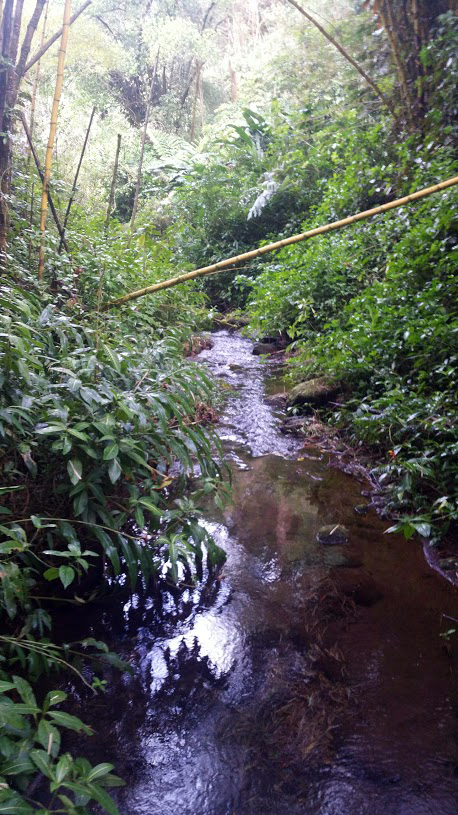 Stream near Akaka Falls, Hamakua Coast