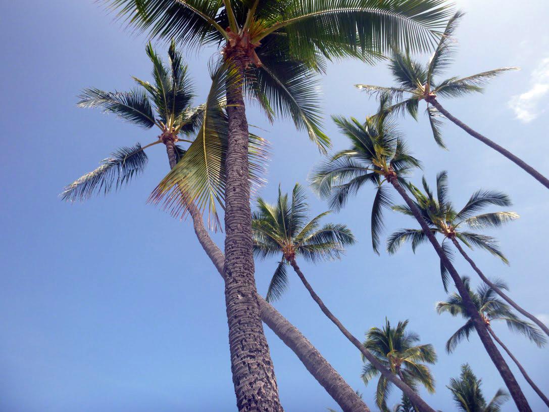 Palms at Magic Sands (La'aloa), Kailua-Kona
