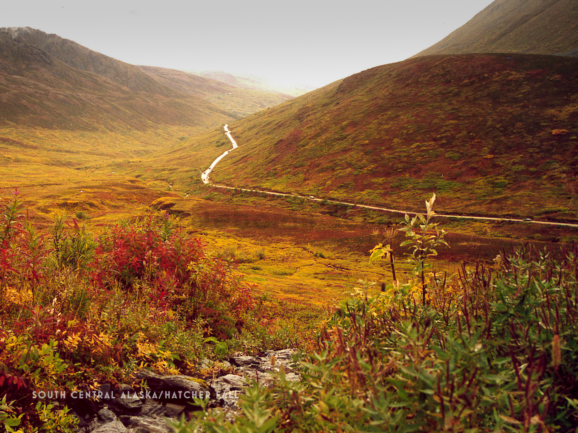 CT3.South Central Alaska-Hatcher_ fall.jpg