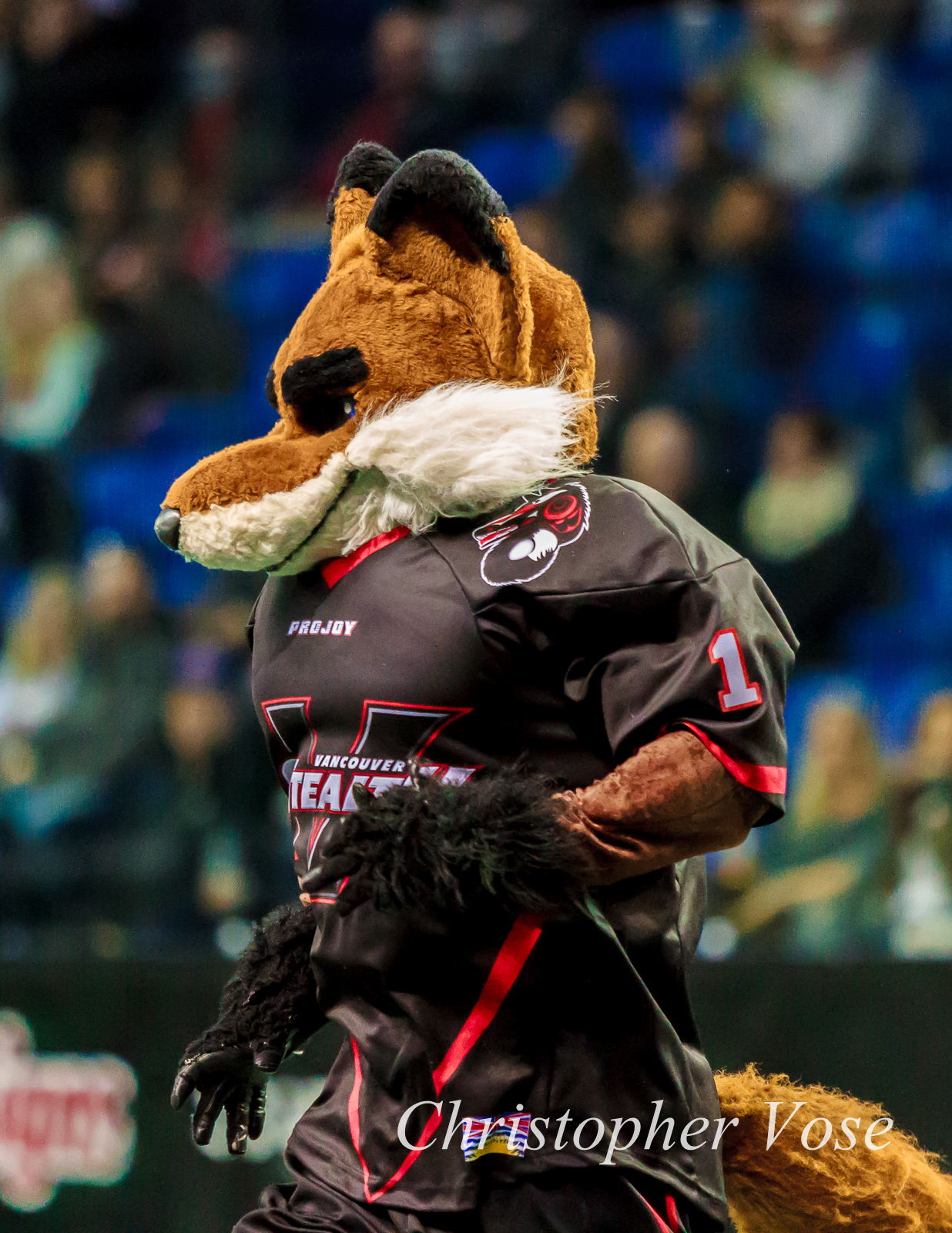 Bomber the Fox has 13 reasons to smile.