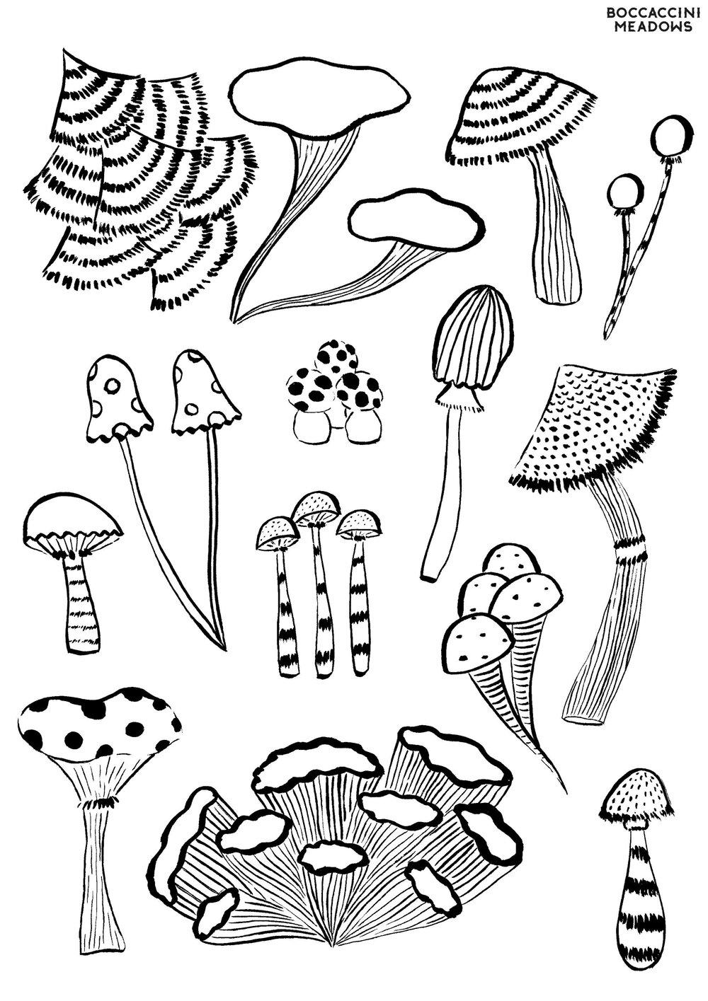 Fungi Boccaccini Meadows