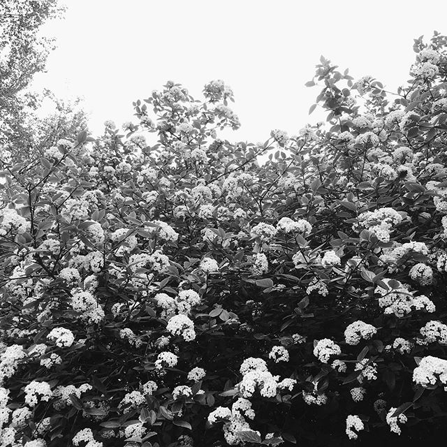 💛 #botanical #floral #centralpark