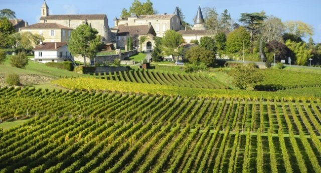 vineyard-saint-emilion-bordeaux-and-the-wine-country-france_main-640x346.jpg
