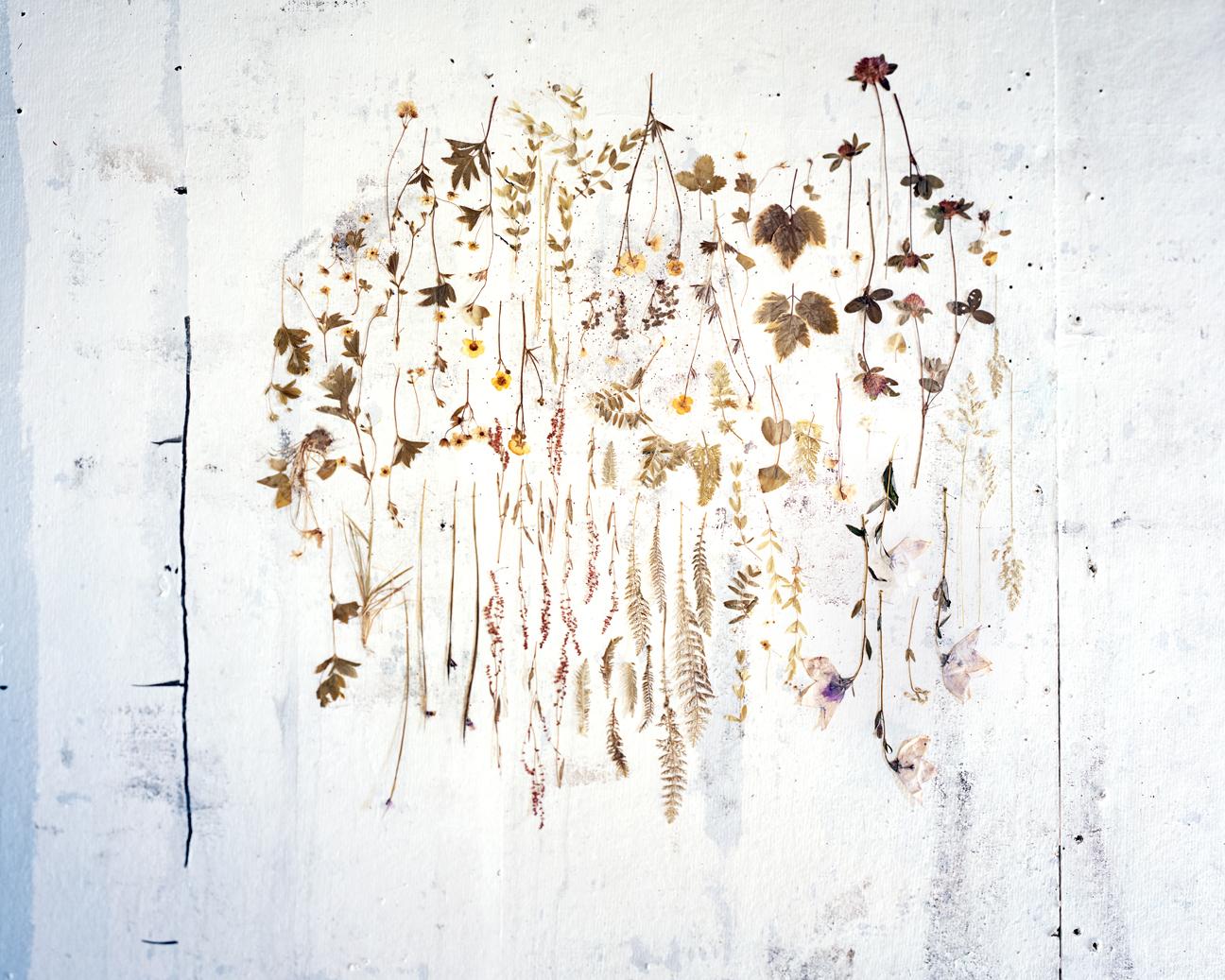 Pressed Flowers 1978-2013
