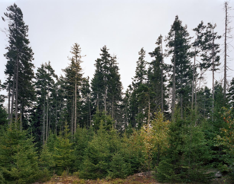 Stonington Woods
