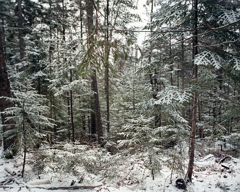Winter Wood Road