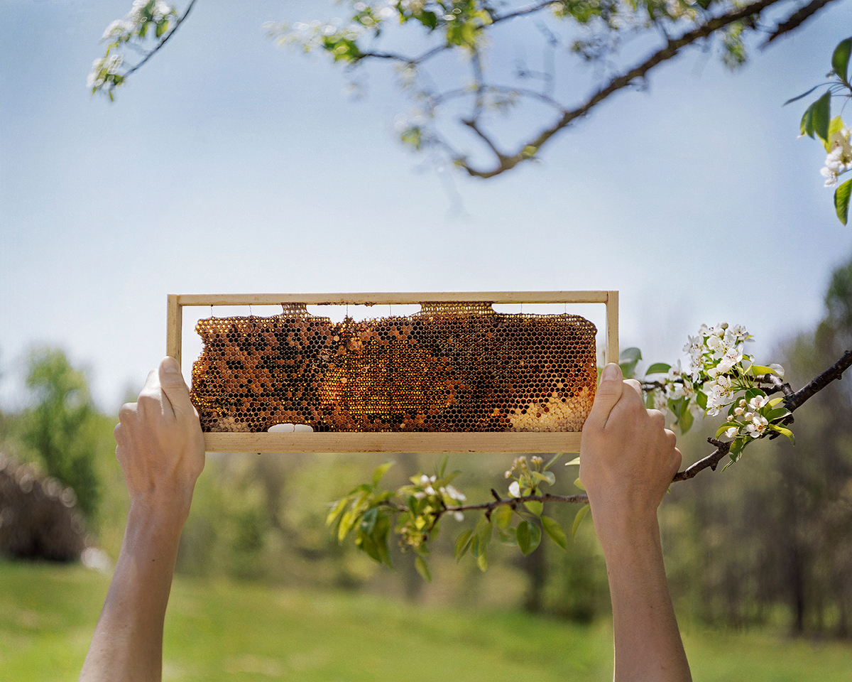 Abandoned Hive