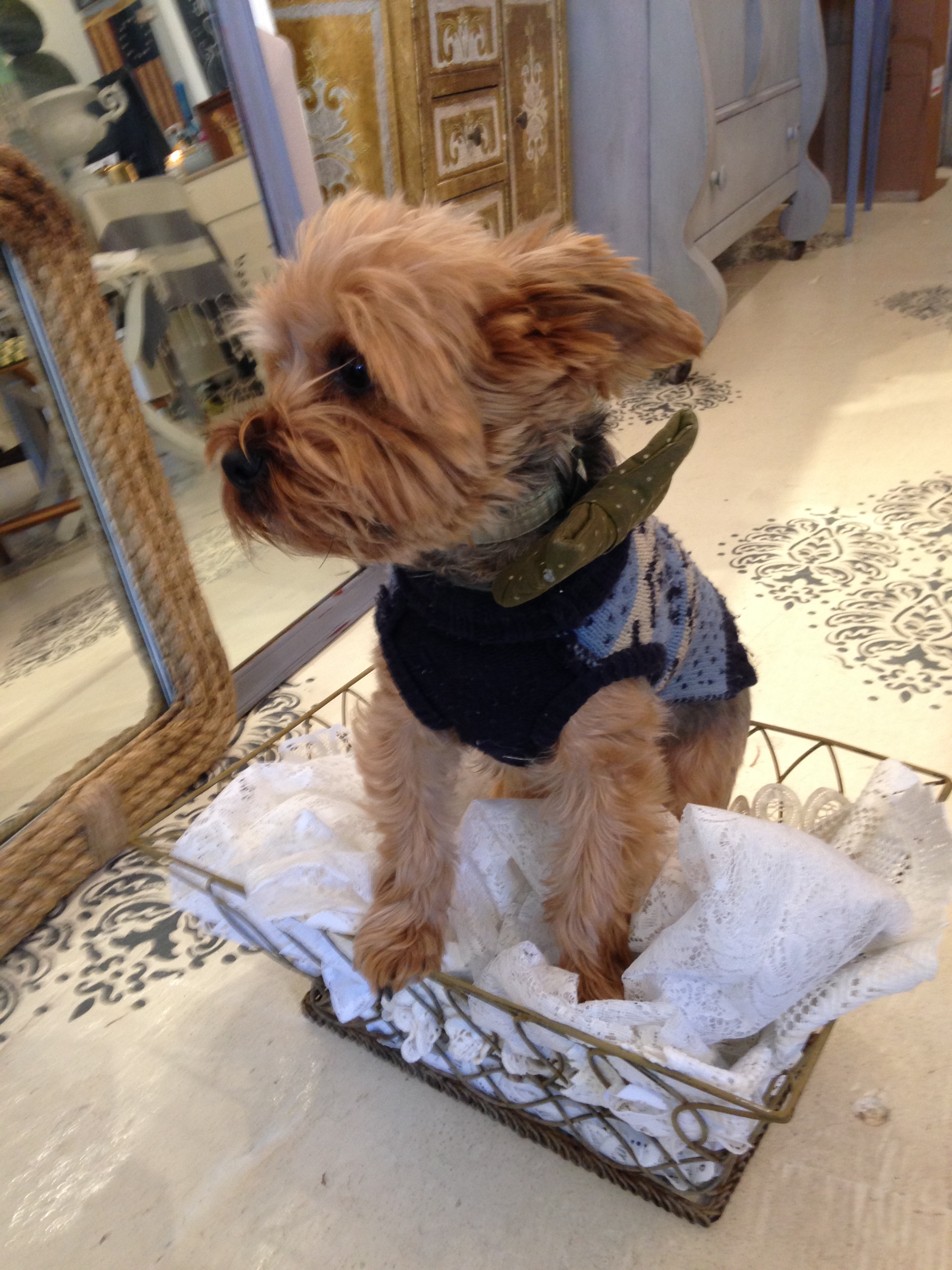 Oliver is sporting his finest bow tie for the trunk show!