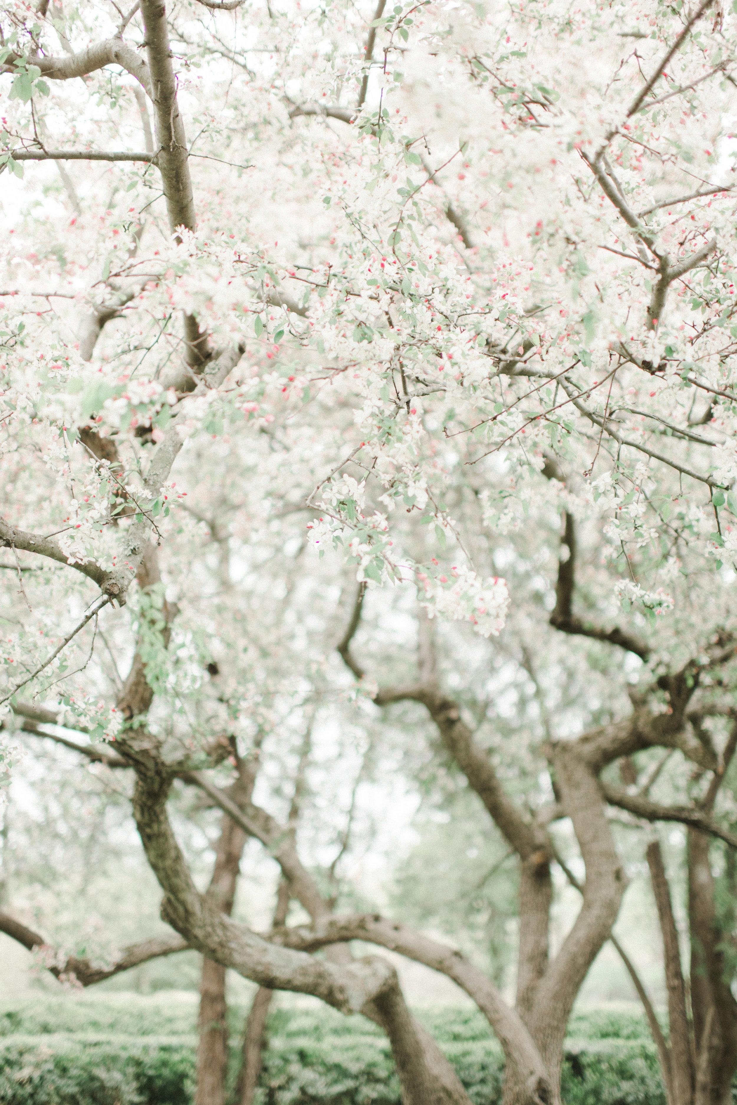 wild green yonder flowers