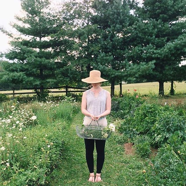 Garden Inspiration: Wild Green Yonder picking blooms at Fields of Flowers in Purcellville, VA