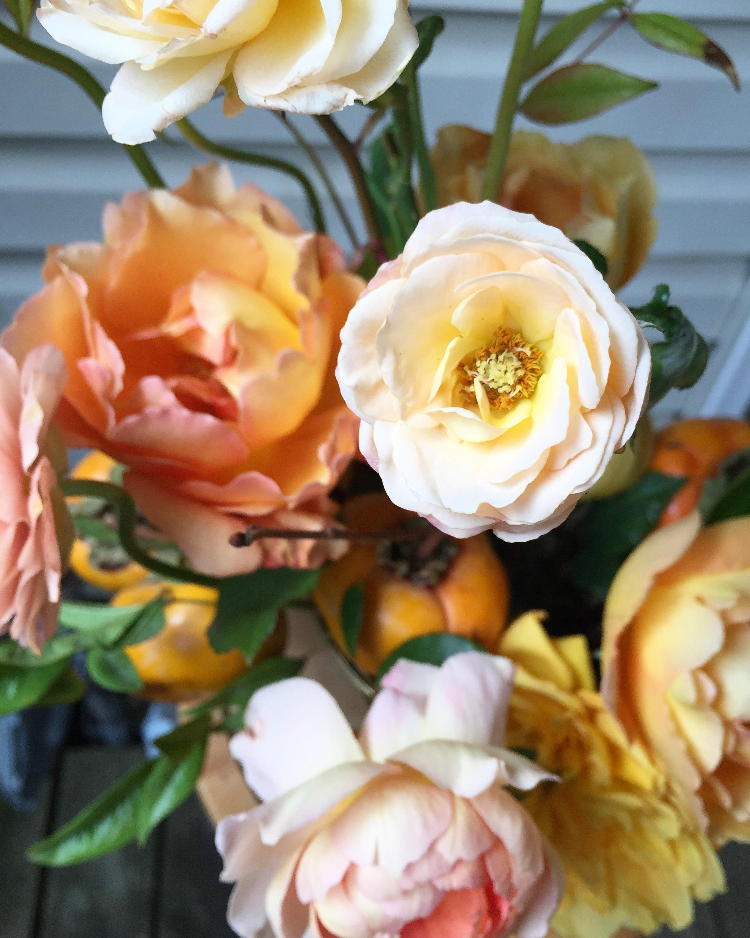 garden roses | wild green yonder