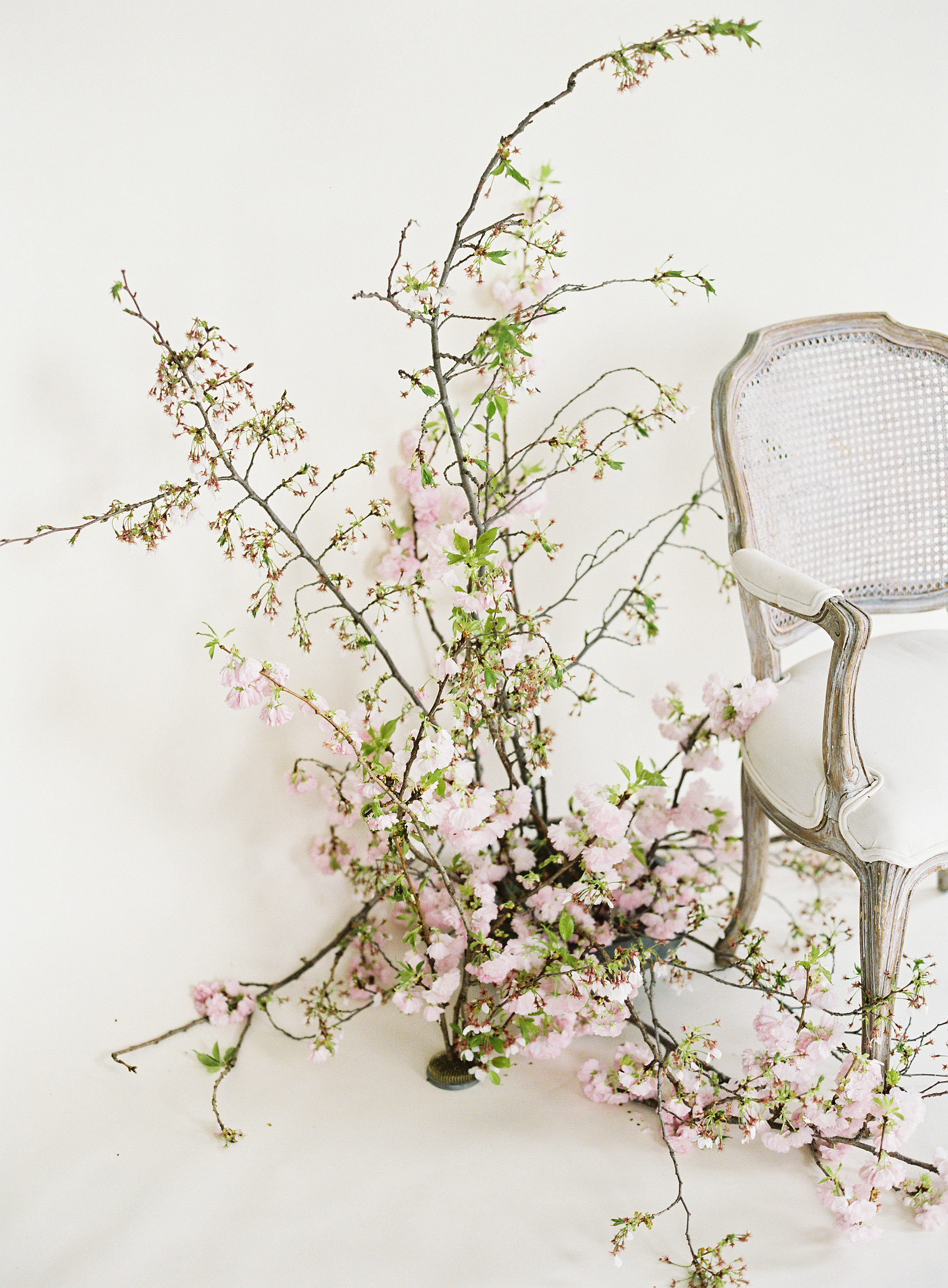Cherry Blossom Installation by Wild Green Yonder