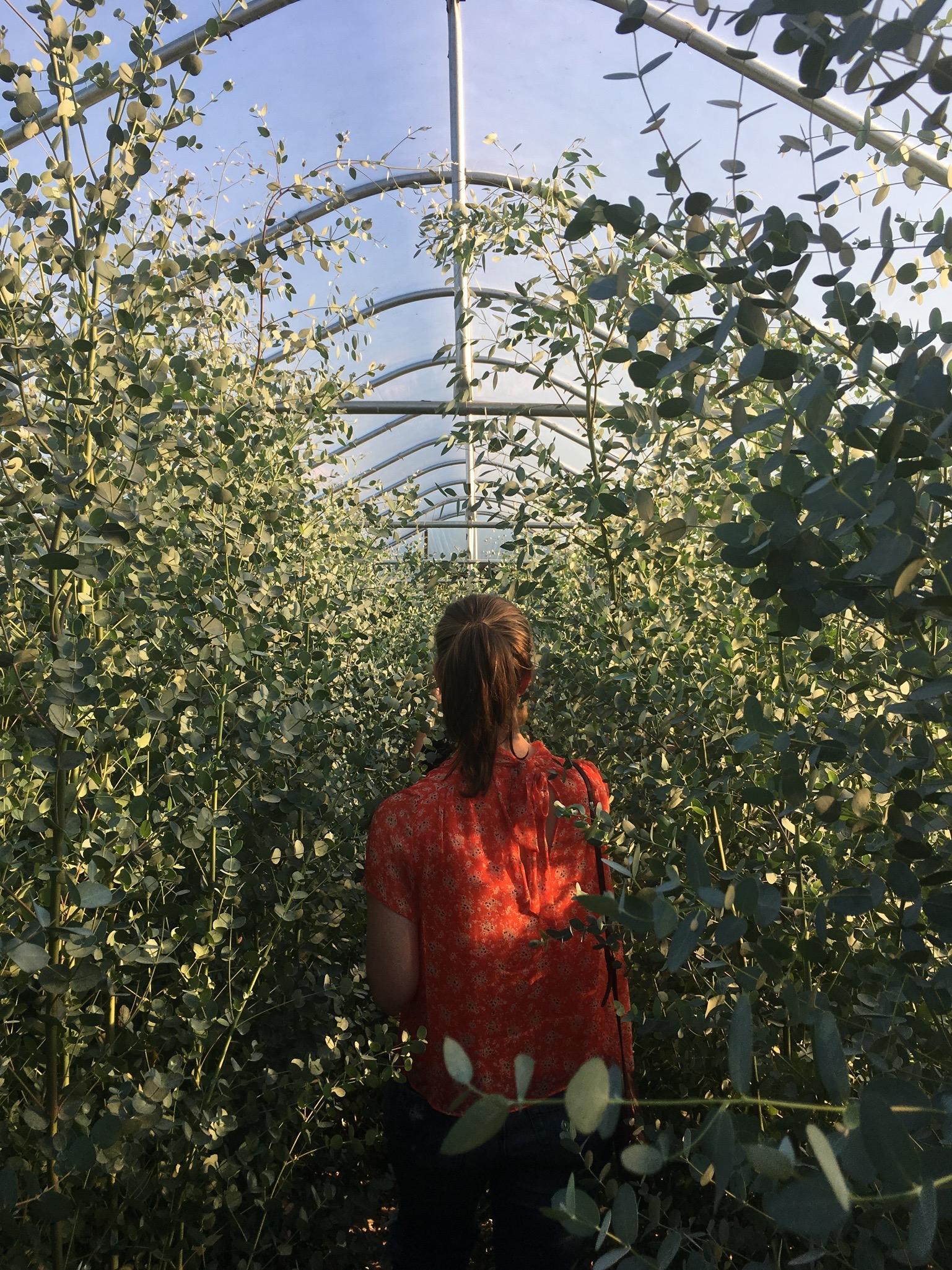 Wild Green Yonder at Greenstone Fields - a local Virginia flower farm
