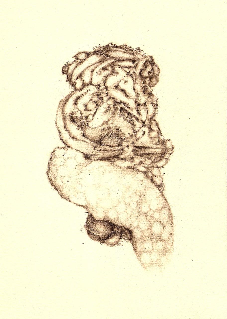 Form VI