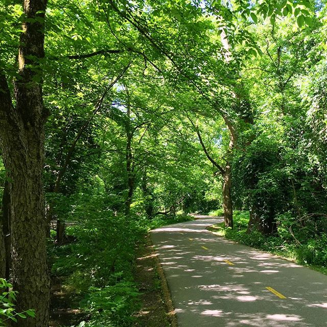 Happy #nationaltrailsday 🌿🌳The Olentangy River Trail offers miles of scenic riverside views that wind and curve through the backbone of the city. Not a bad place to run! #columbus #oh #olentangy #marathontraining #nycmarathon #tcsnycmarathon #getouttorun