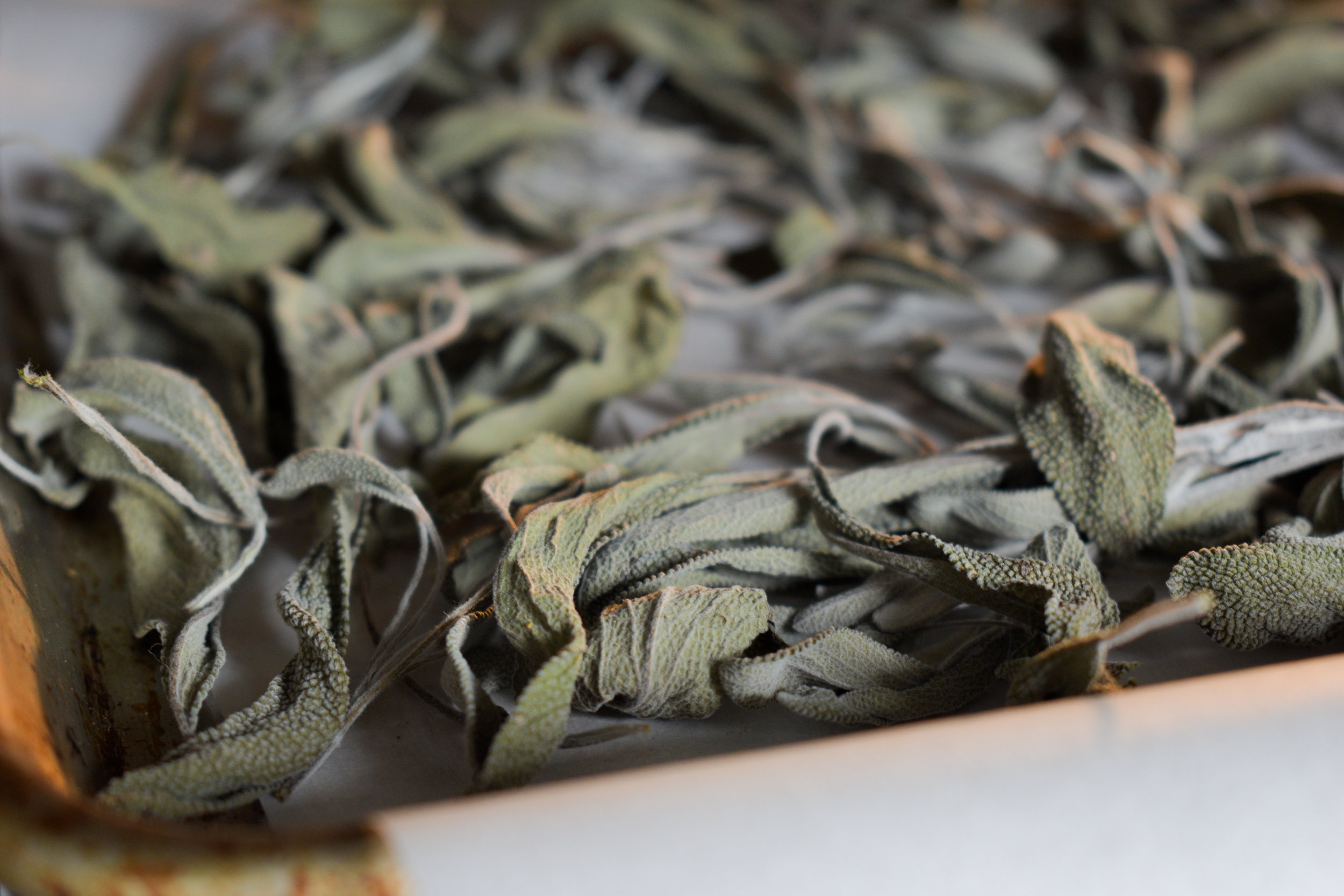 Oven-dried Sage