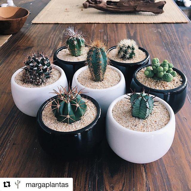 I want all the 🌵  #Repost @margaplantas with @get_repost ・・・ 🌿 Promoción 🌿 . . Nuevo Cactus en macetas cerámicas . . Unidad a $20,000 Set x 3 $50,000 . . www.margaplantas.com  #house #plant #cactus #cacti #bohostyle