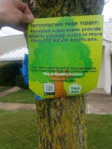 Tree_tag_rear.jpg