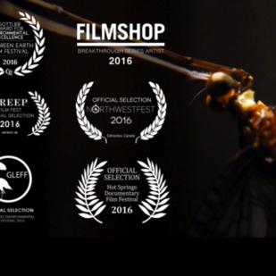 The Festival - Original Score | . Documentary