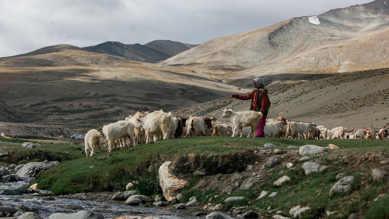 2017_Ladakh Nomad1-8.jpg