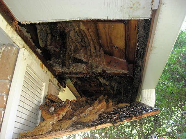 Dorothy Garren's beehive-001.jpg