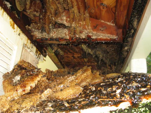 Dorothy Garren's beehive-003.jpg