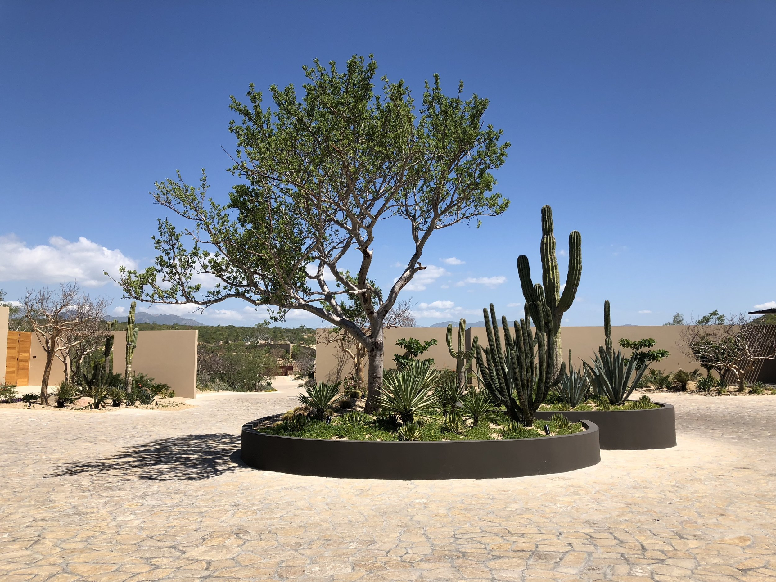 Montage Los Cabos - Front Drive with Desert Landscaping