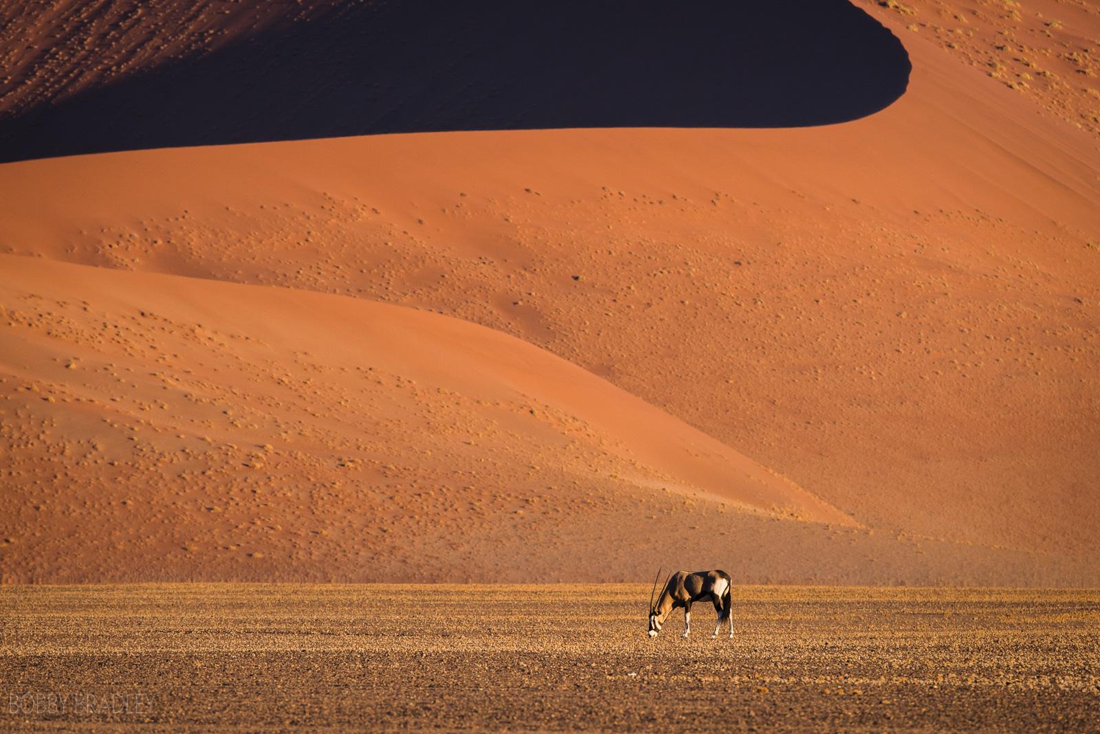 Orxy Dune