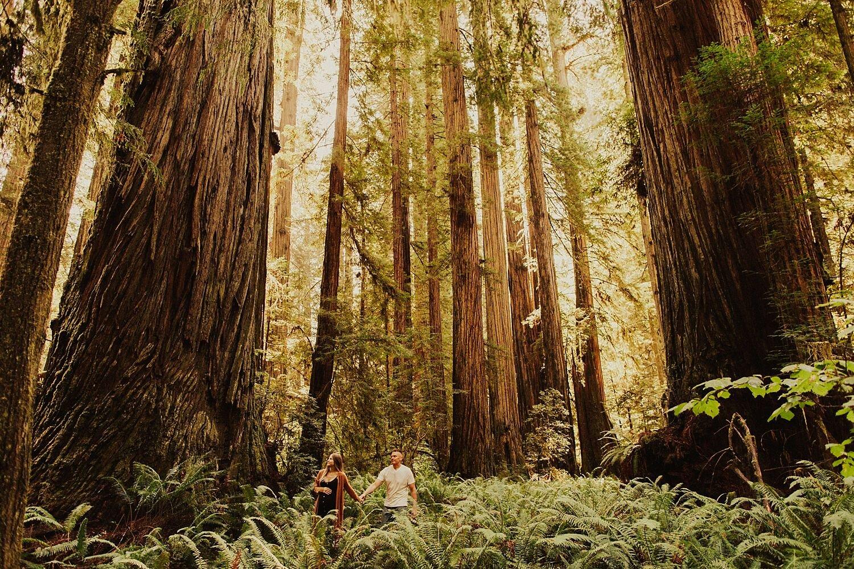 redwoods-california-maternity-photos_4288.jpg