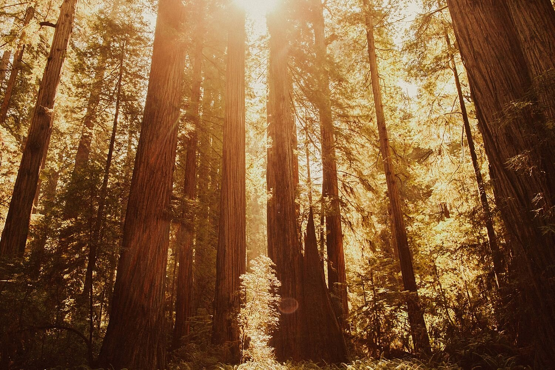 redwoods-california-maternity-photos_4298.jpg